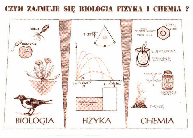 Czym zajmuje się biologia, fizyka i chemia?